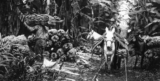 Resultado de imagen para gaitan y masacre delas bananeras