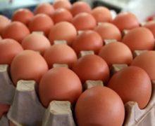 Comprar huevos baratos y buenos en Pasto. Compre una cubeta o panal a precio de mayorista