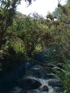 Catambuco tiene diversas fuentes de agua pero se ven amenzadas por privatización del preciado líquido