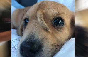 Perrito con cola en su cabeza