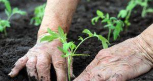 agricultura comunitaria