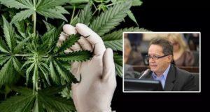 cannabis es una gran oportunidad